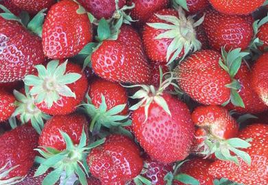 Découvrez et mangez : les fraises